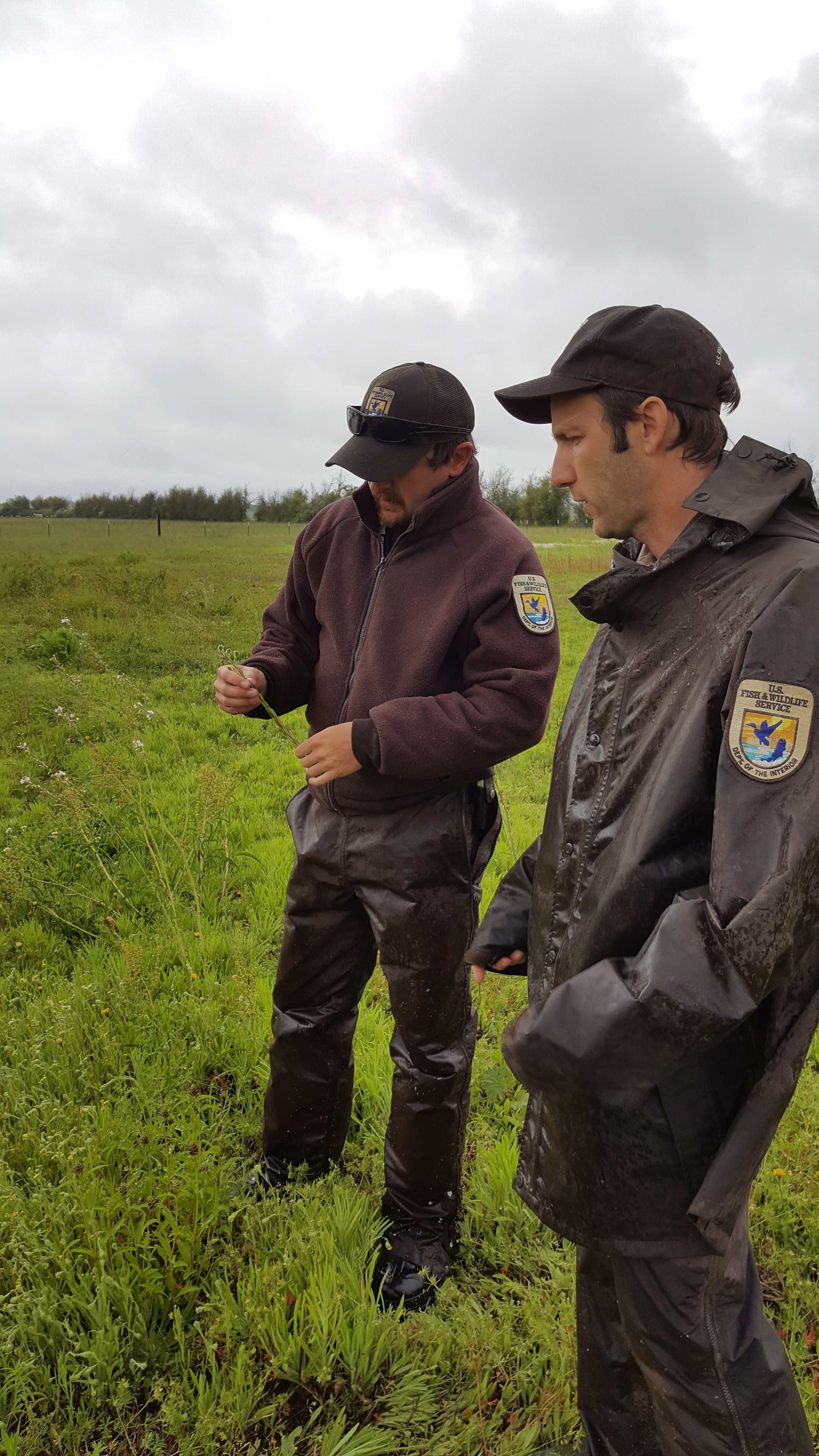 Springtime tour with Cameron King and Chris Seal, U.S. Fish & Wildlife Service.  A raining but very exciting day to see the wetland bloom in the SW field.