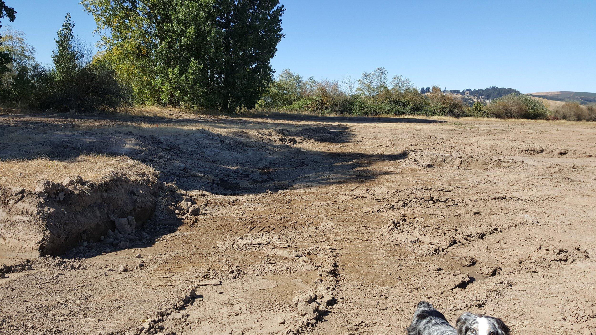 30' x 30' pond near riparian vegetation at Santiam Valley Ranch.