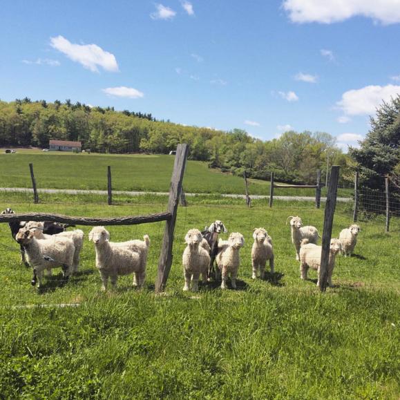 fiberhouse collective nica rabinowitz sheep