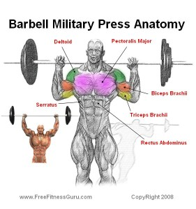military-press-diagram-281x3001.jpg