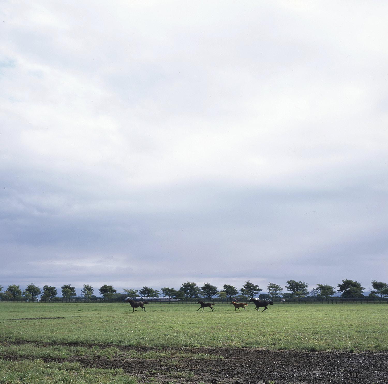 Shadai Farm, Hidaka, Hokkaido, Japan, 2017.