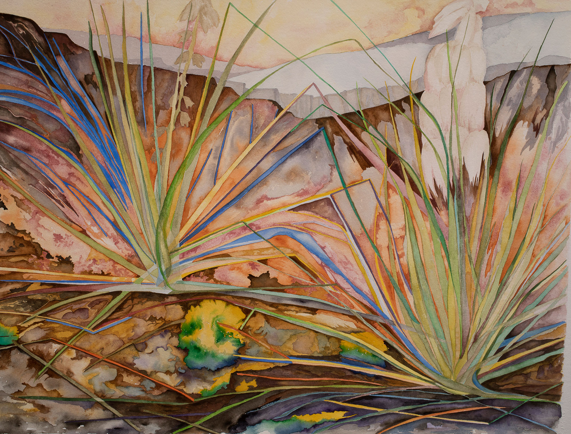 Untitled Yucca series #1, 2017, watercolor on Arches watercolor paper, 22 x 30 in.