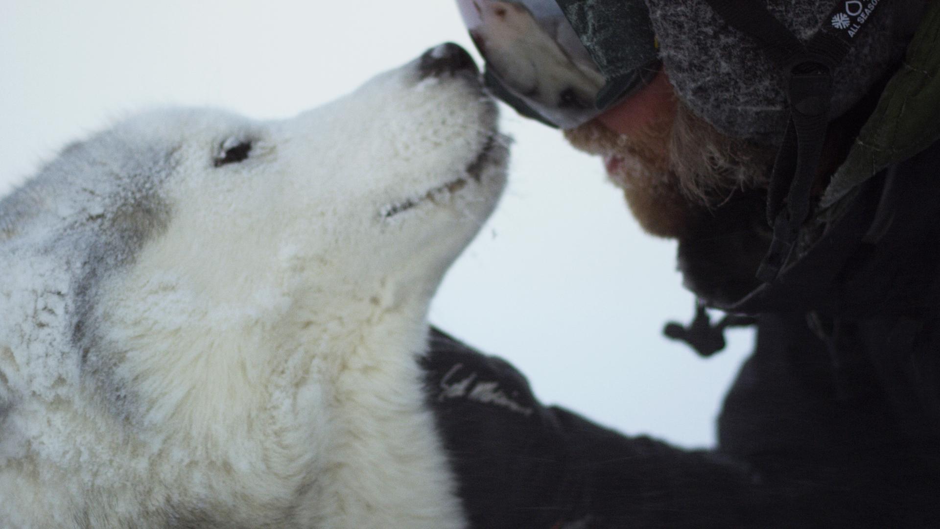 Loki the Wolfdog  GLS Video Pass