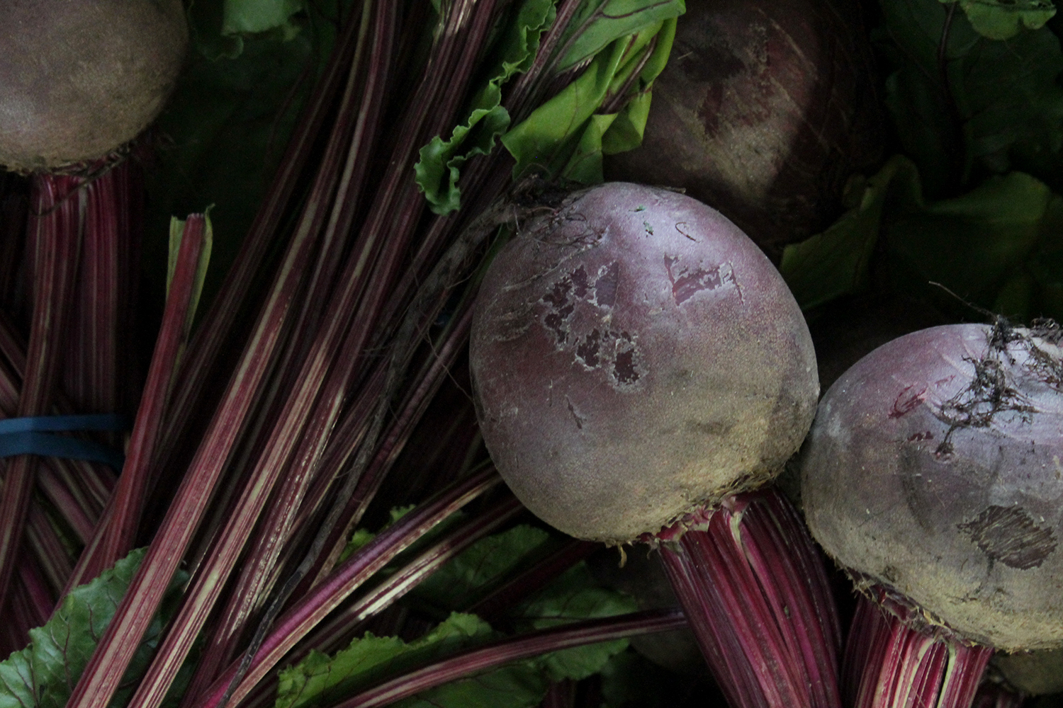 Beets sold at Robt. t. Cochran & Co.