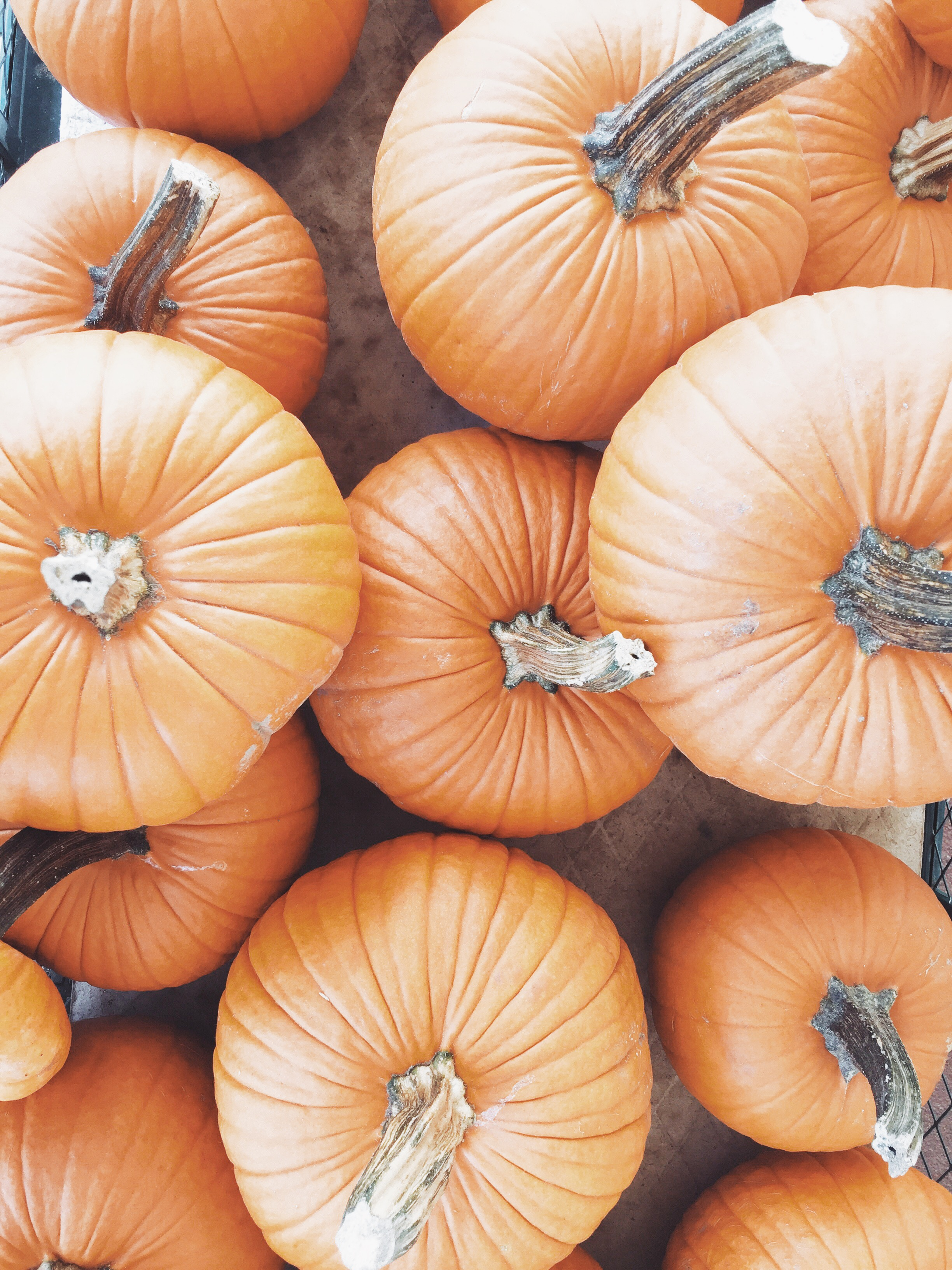 A DAY TO GIVE THANKS (via JacinthaPayne.com)