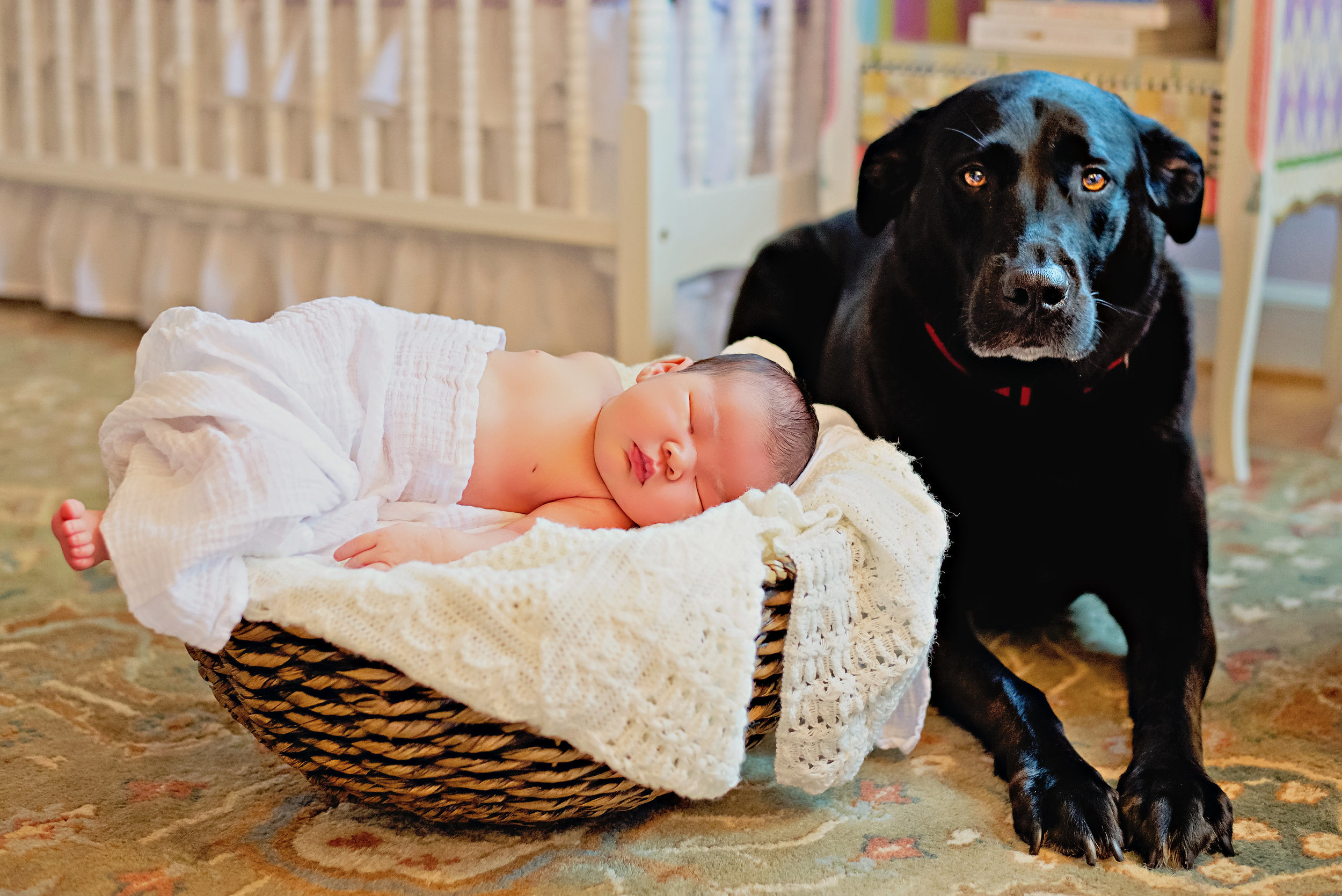 blacklabandnewbornbaby.jpg