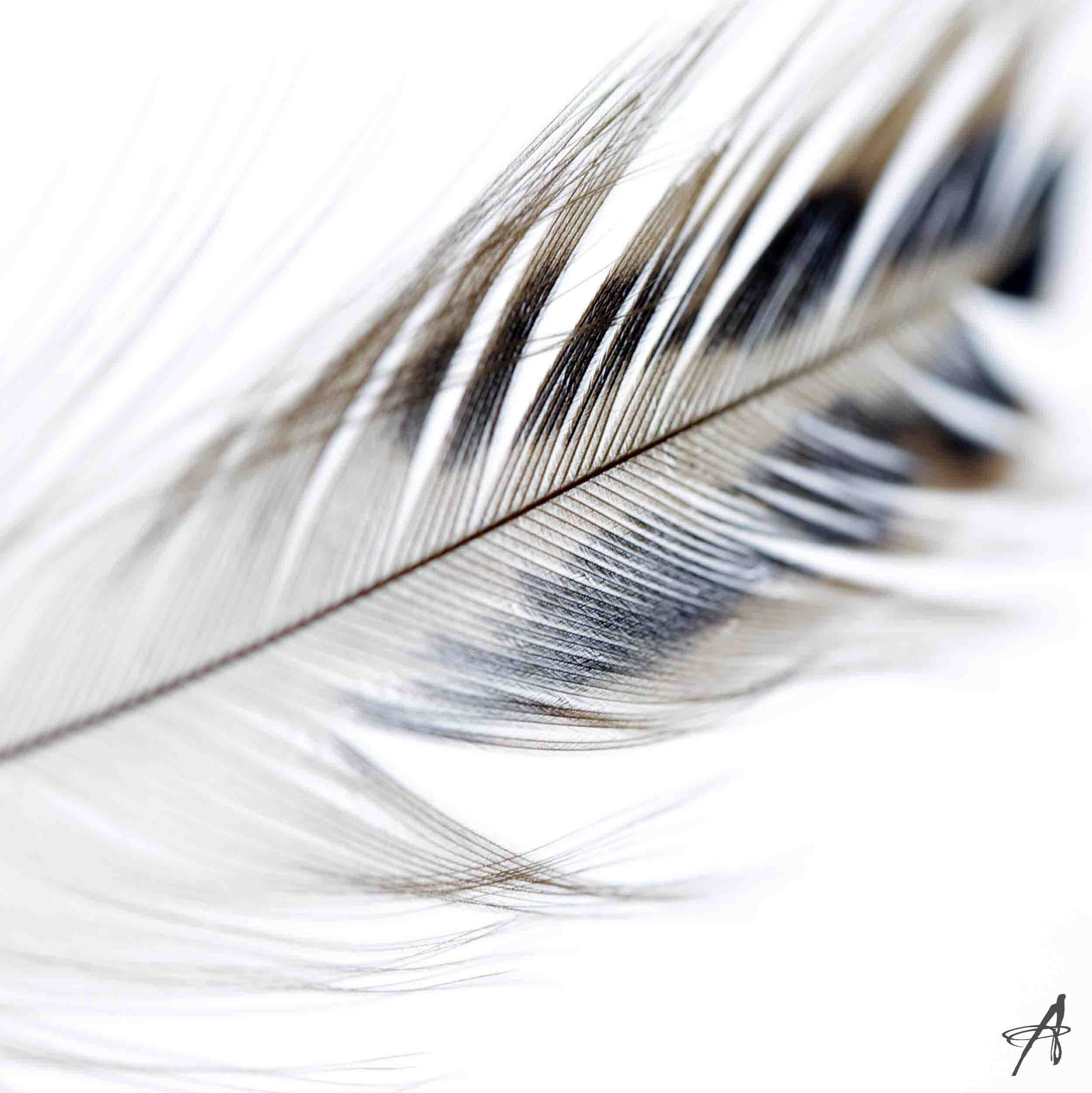 Feather 5