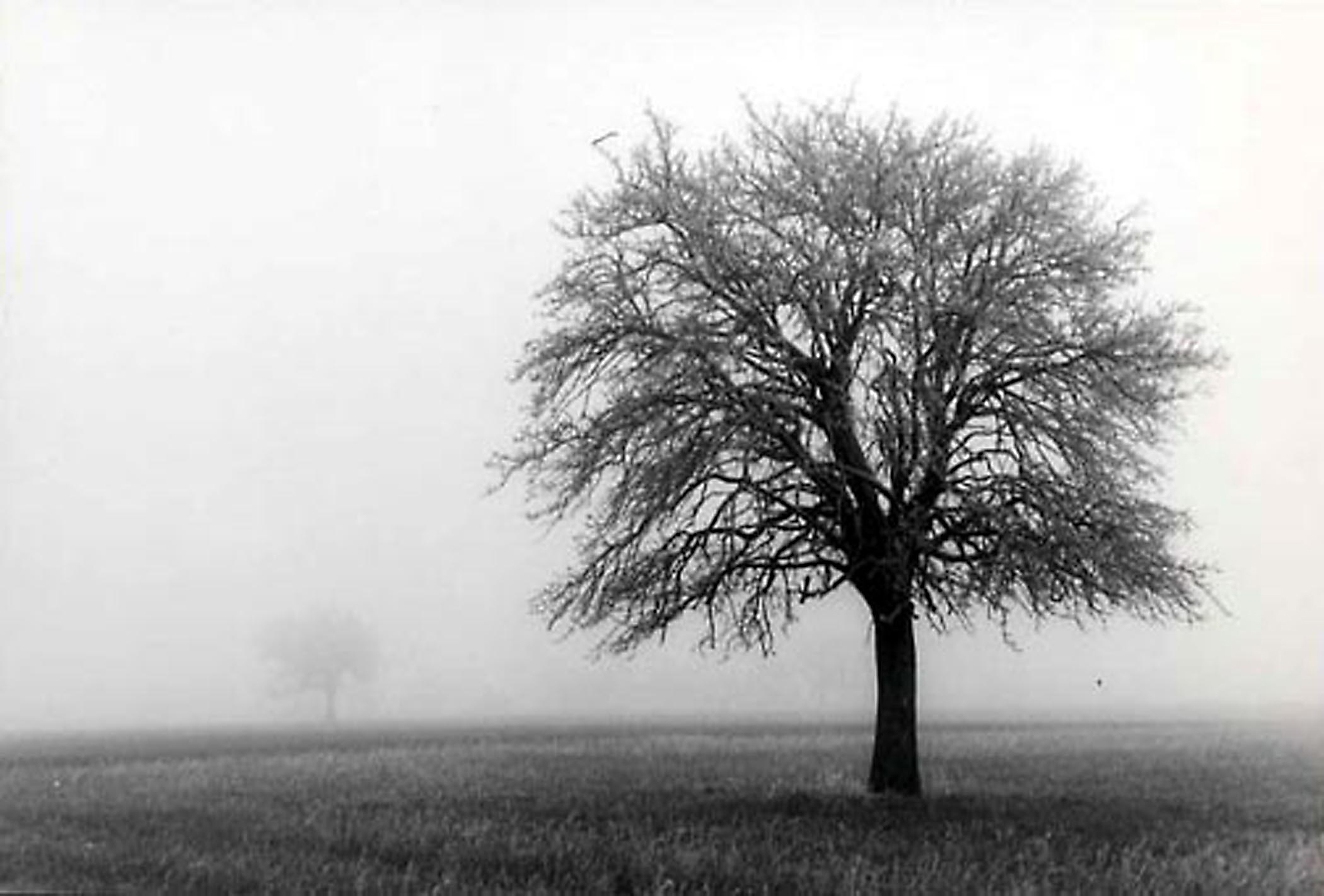 HANNON_two_trees_in_fog_(france)_1956_11x14_high.jpg
