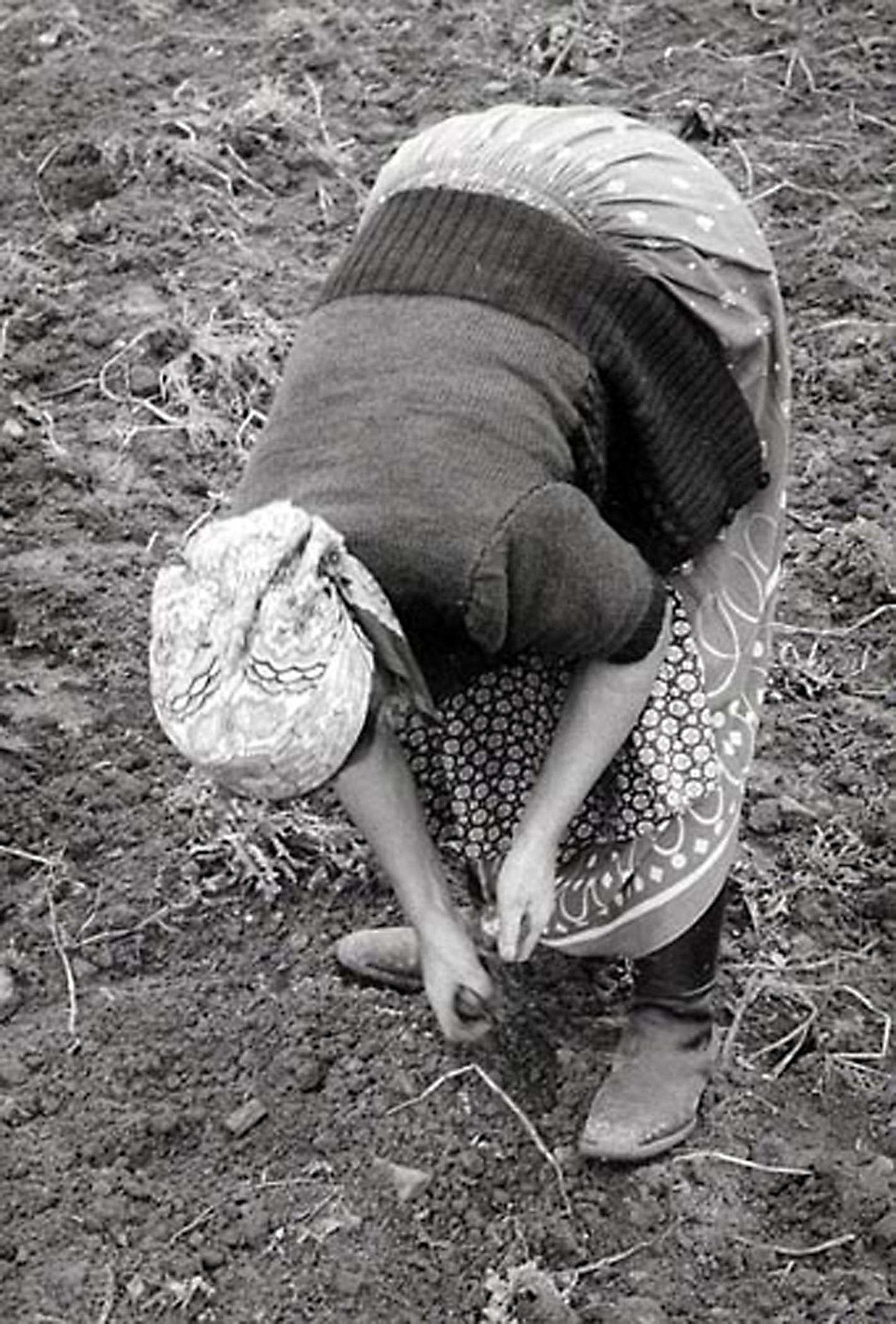 HANNON_potato_picker_(germany)_1957_11x14_high.jpg