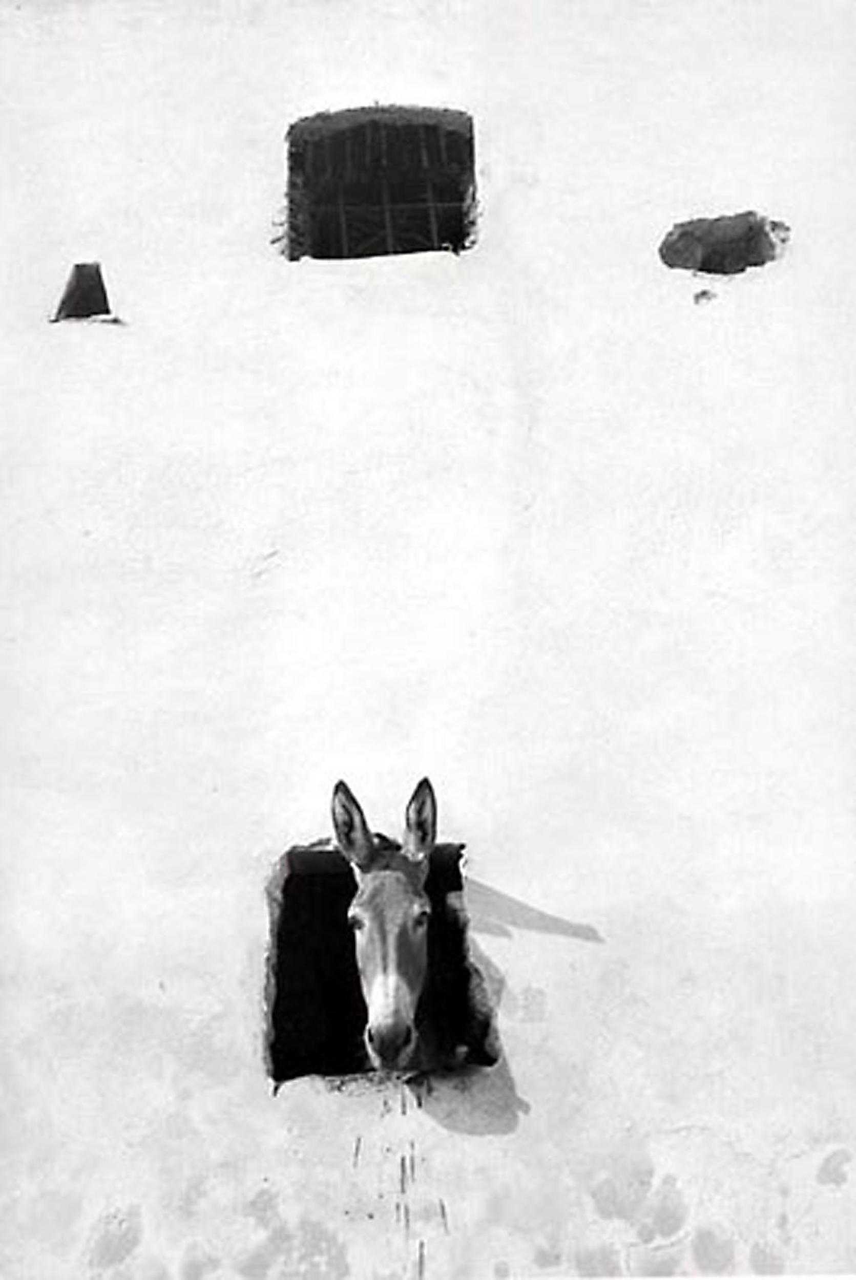 HANNON_donkey_in_window_(elba_italy)_1958_p11x14_high.jpg