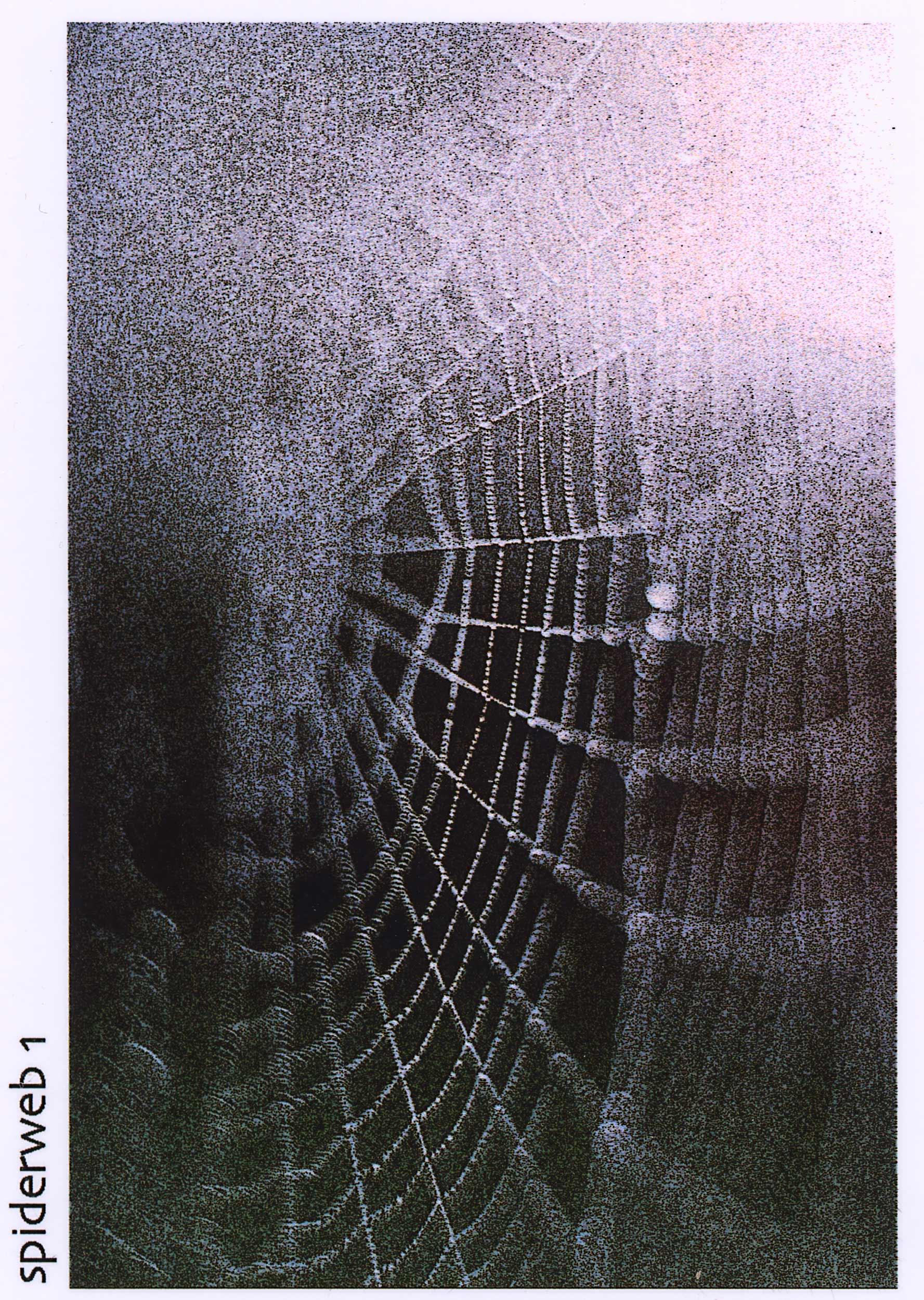 HUNTER_spiderweb_1.jpg