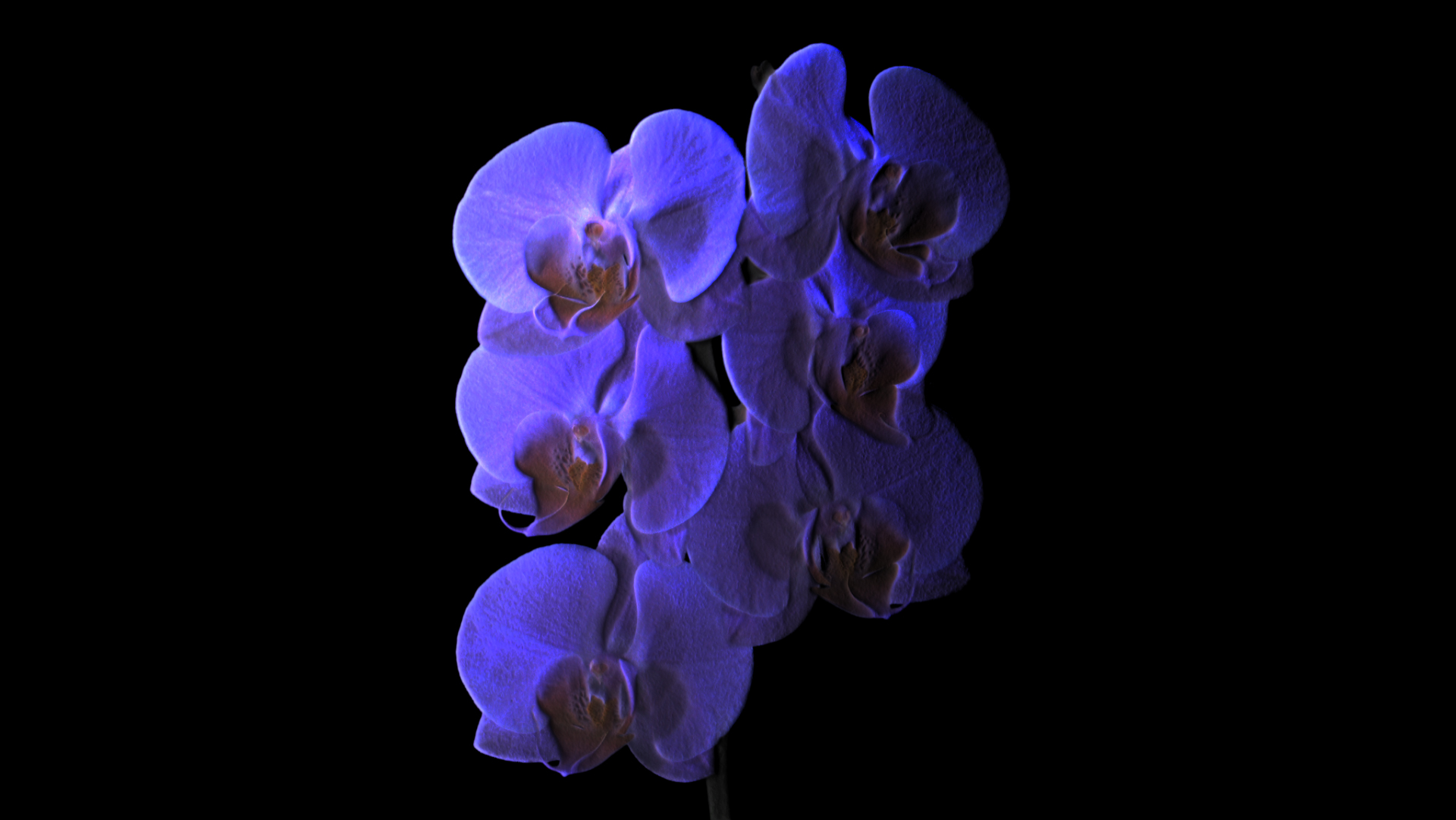 Orchids growing slow_01 (0-00-01-16).jpg