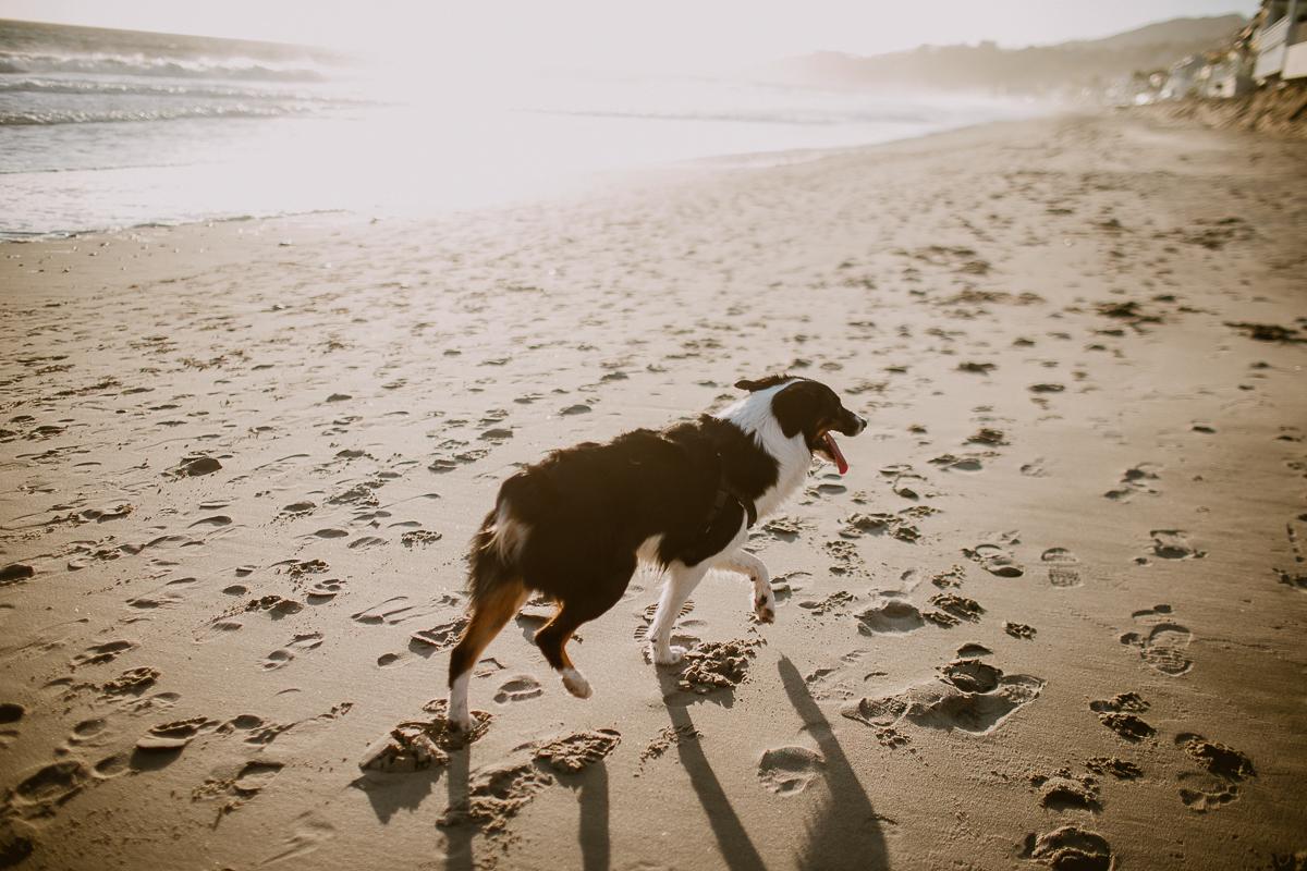 malibu-carbon-beach-engagement-session-kelley-raye-los-angeles-lifestyle-photographer-30.jpg