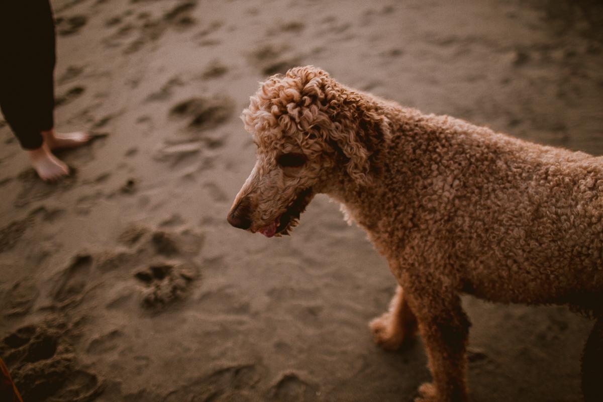 malibu-carbon-beach-engagement-session-kelley-raye-los-angeles-lifestyle-photographer-143.jpg