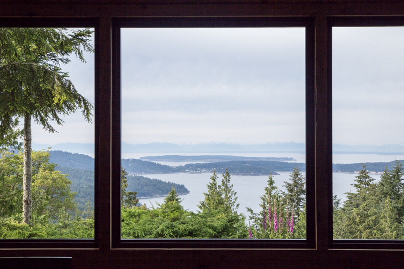 View (from living room).jpg