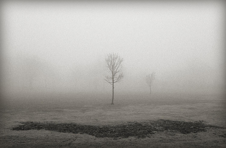 Tree + Fog, ERR, New Jersey