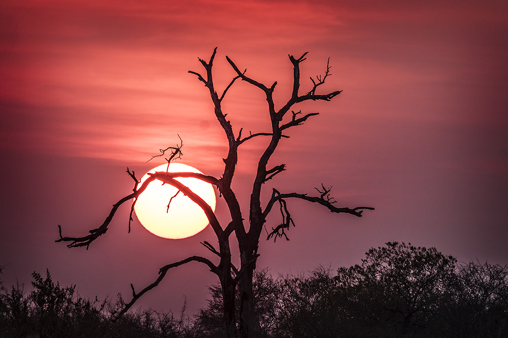 African Sunset, South Africa