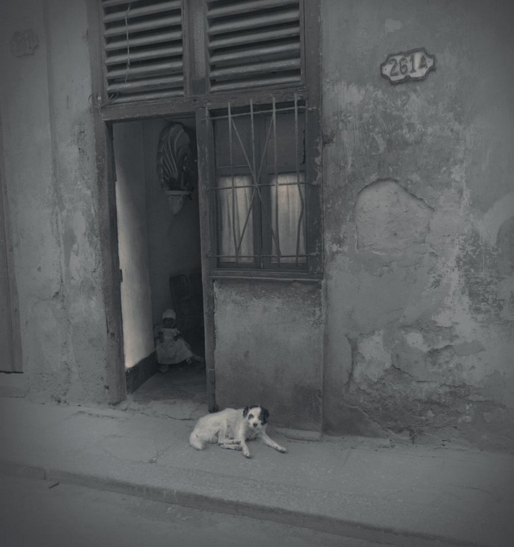 Dog and doll, 2003