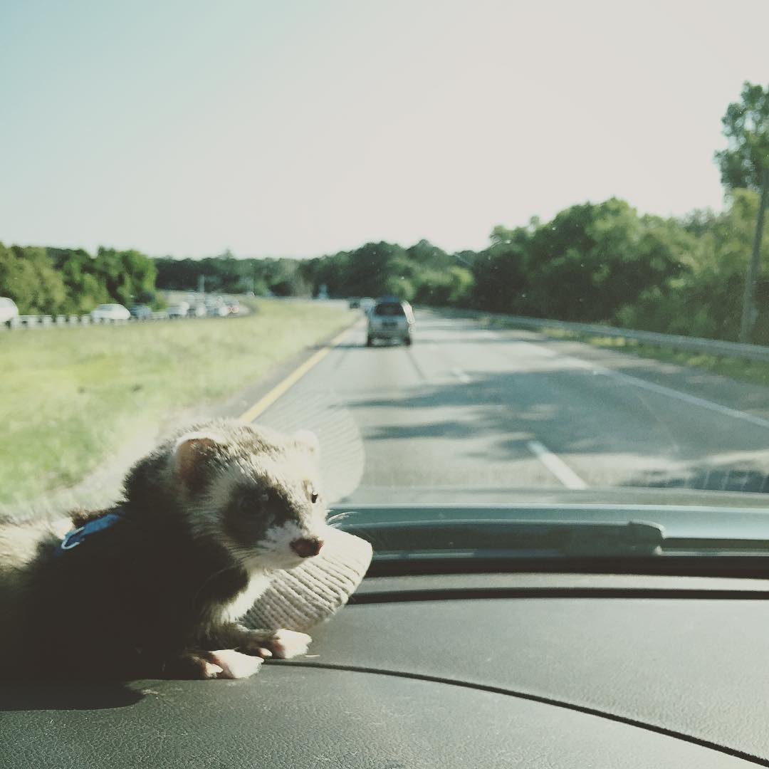 And we rollin... #ferbear #adventures