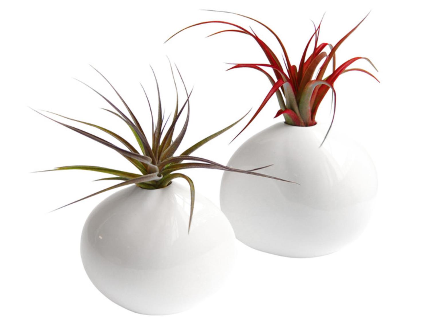 Pebble Porcelain Vases With Air Plants