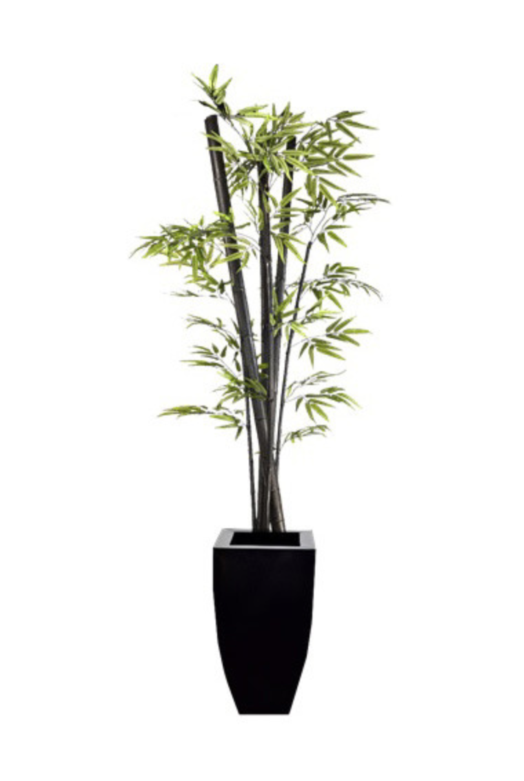 Black Bamboo in Zinc Container