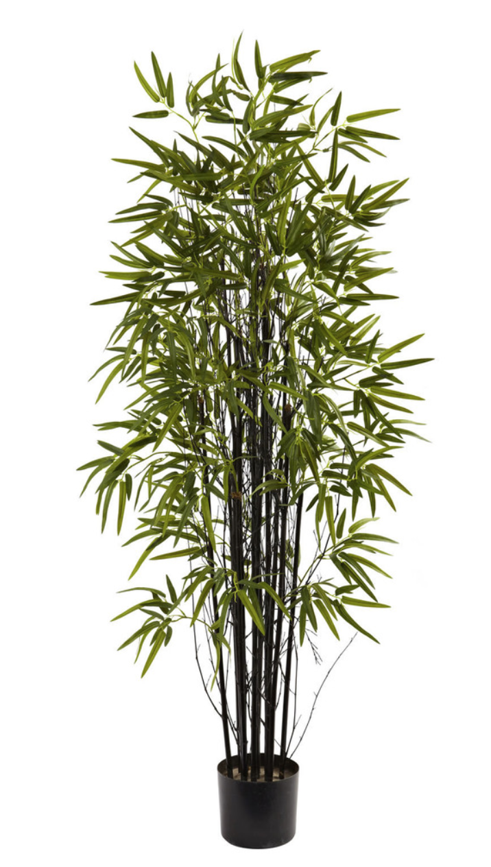 Black Bamboo Tree