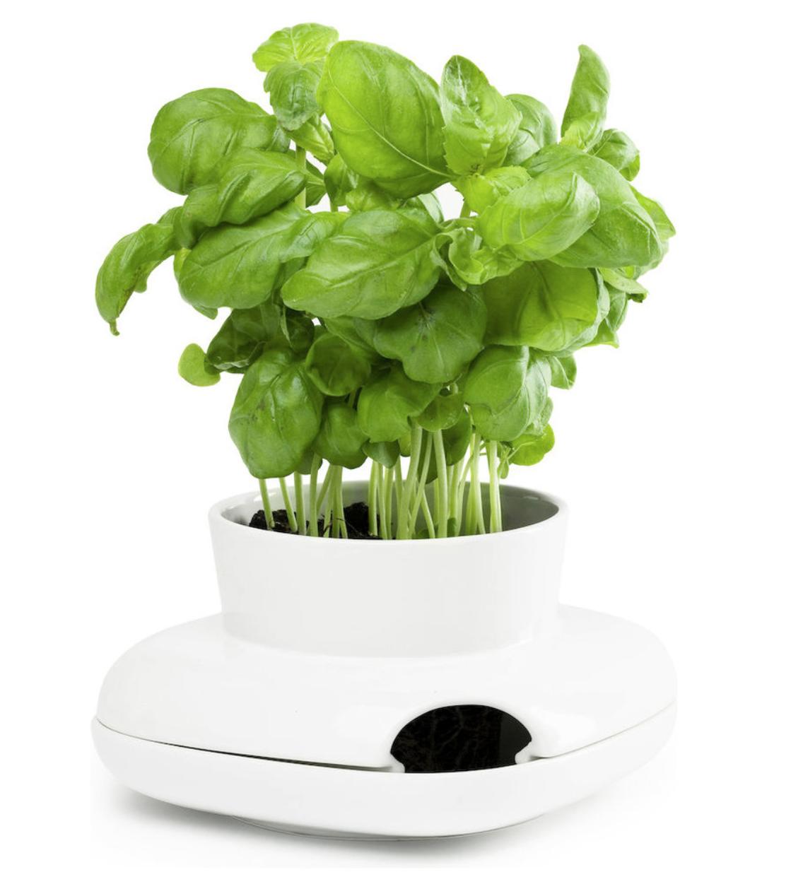 Herb Pot, Small