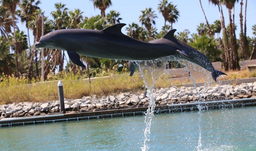 dolphin-2056629_1280.jpg
