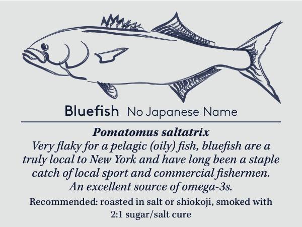 bluefishcard copy (4).jpg