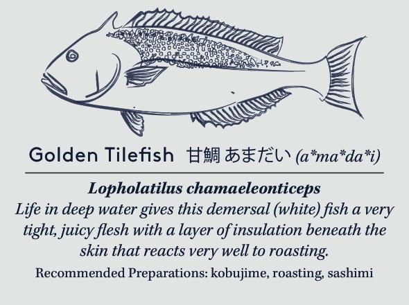goldentilefishcard copy (2).jpg