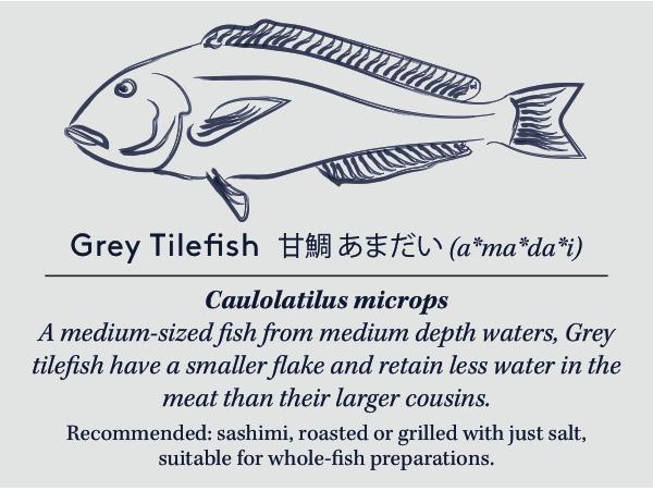 greytilefishcard copy (3).jpg