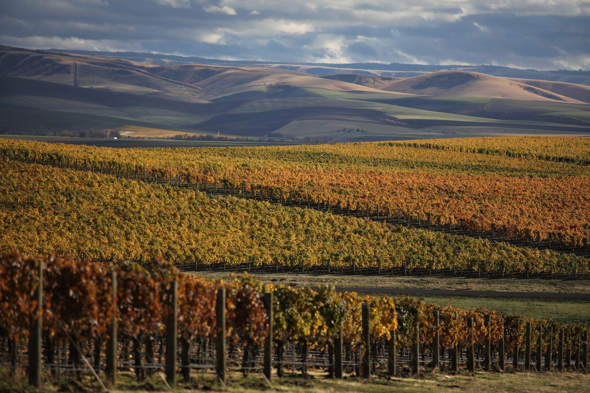 Binaural Block at Blue Mountain Vineyard