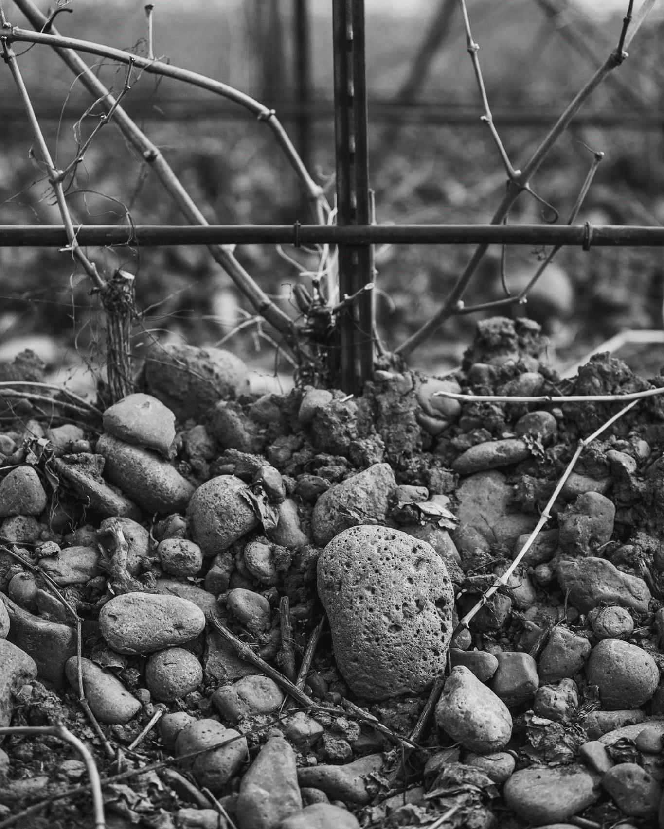 Stoney winter close up.jpg