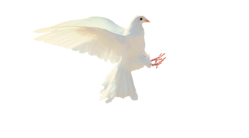Dove optimised.png