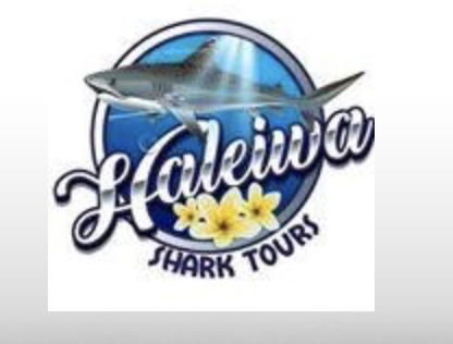 Haleiwa Shark Tours is our recommendation for Cage tours, coastal, surf, and cultural tours.