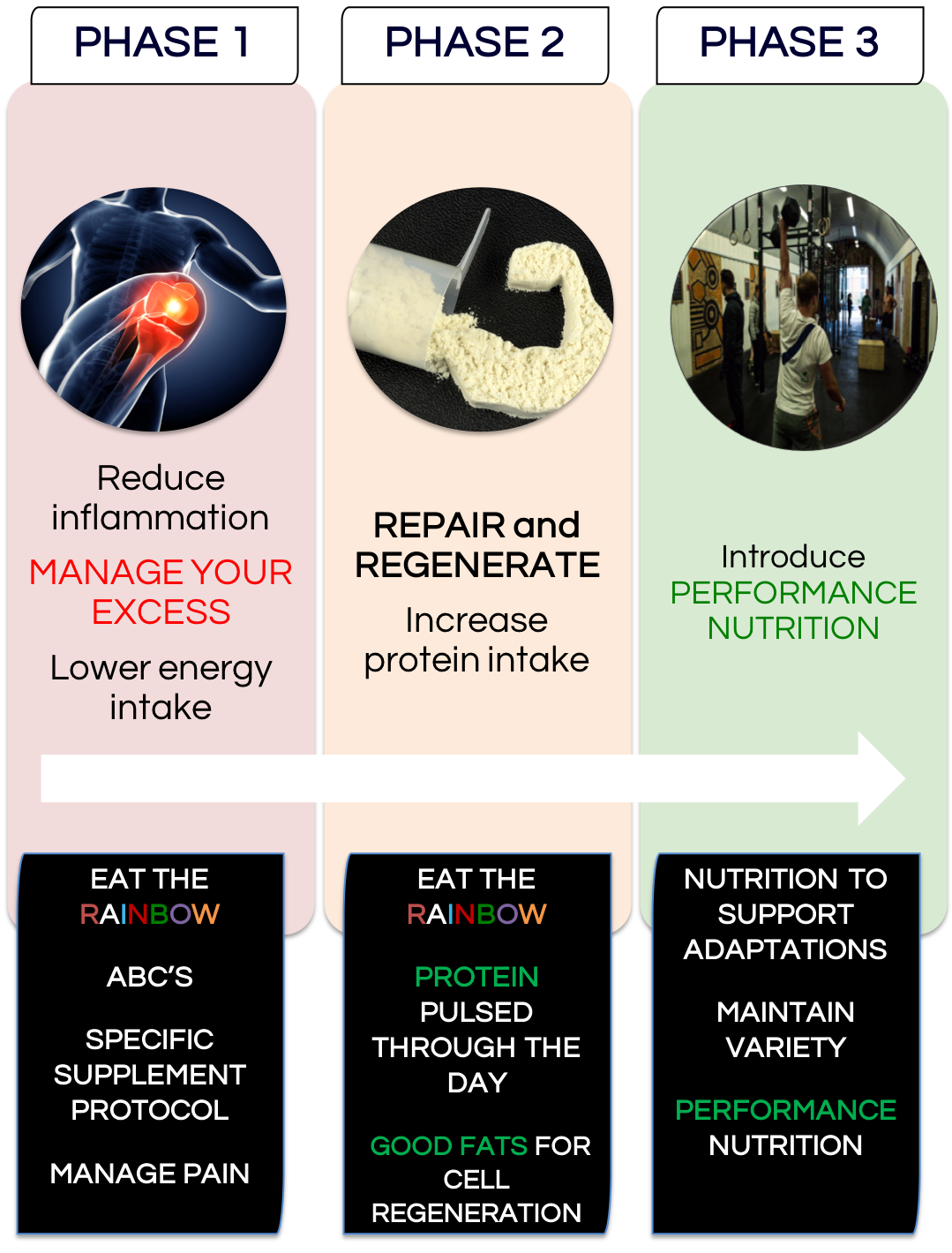 PHASES OF NUTRITION.png