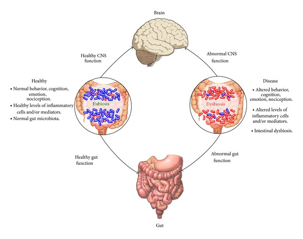 Impact-of-the-gut-microbiota-on-the-gut-brain-axis-in-health-and-disease-It-is-now.png