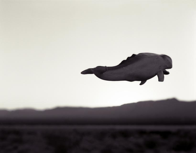 sam davis whale.png