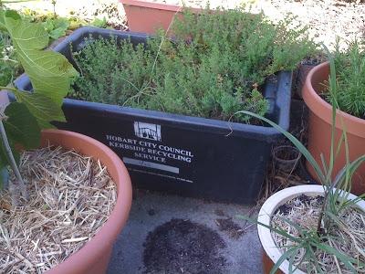 Photo courtesy of  polystyrenegardenjunkie.blogspot.com