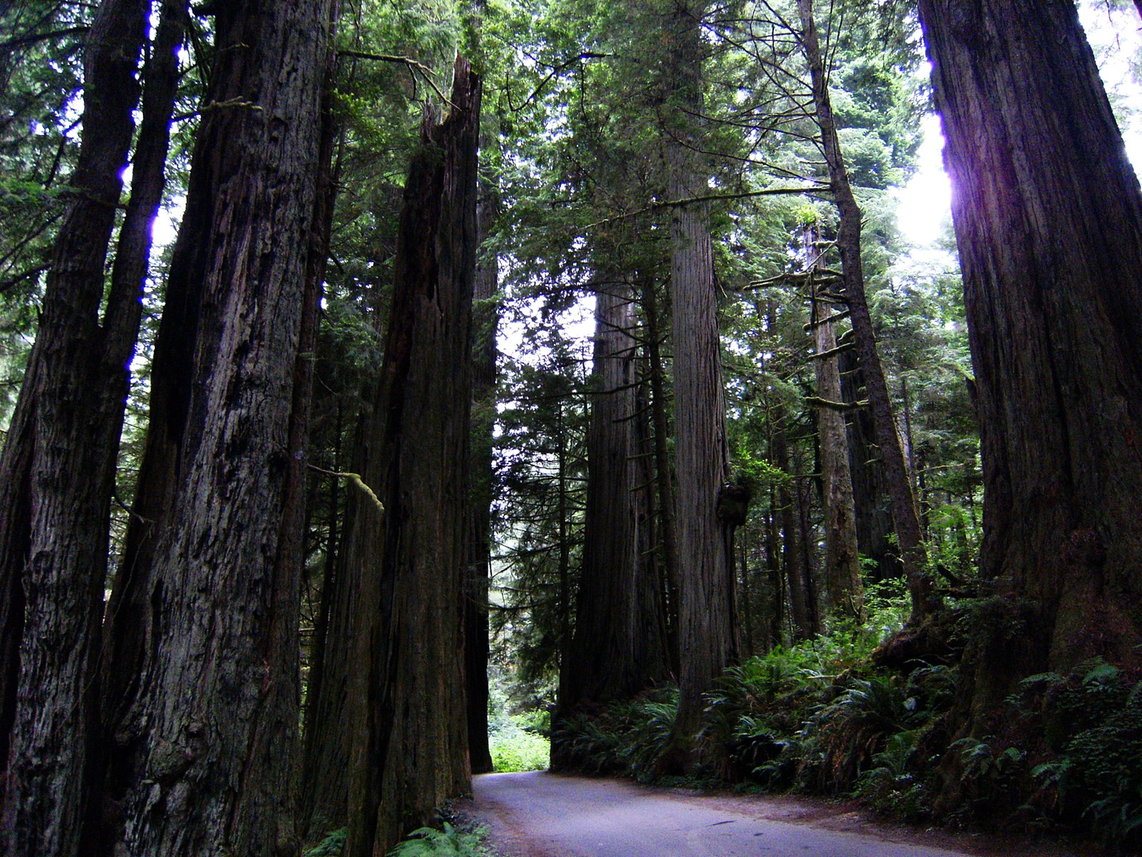Redwood National Park  Photo by Theo Crazzolara/CCA-SA 2.0