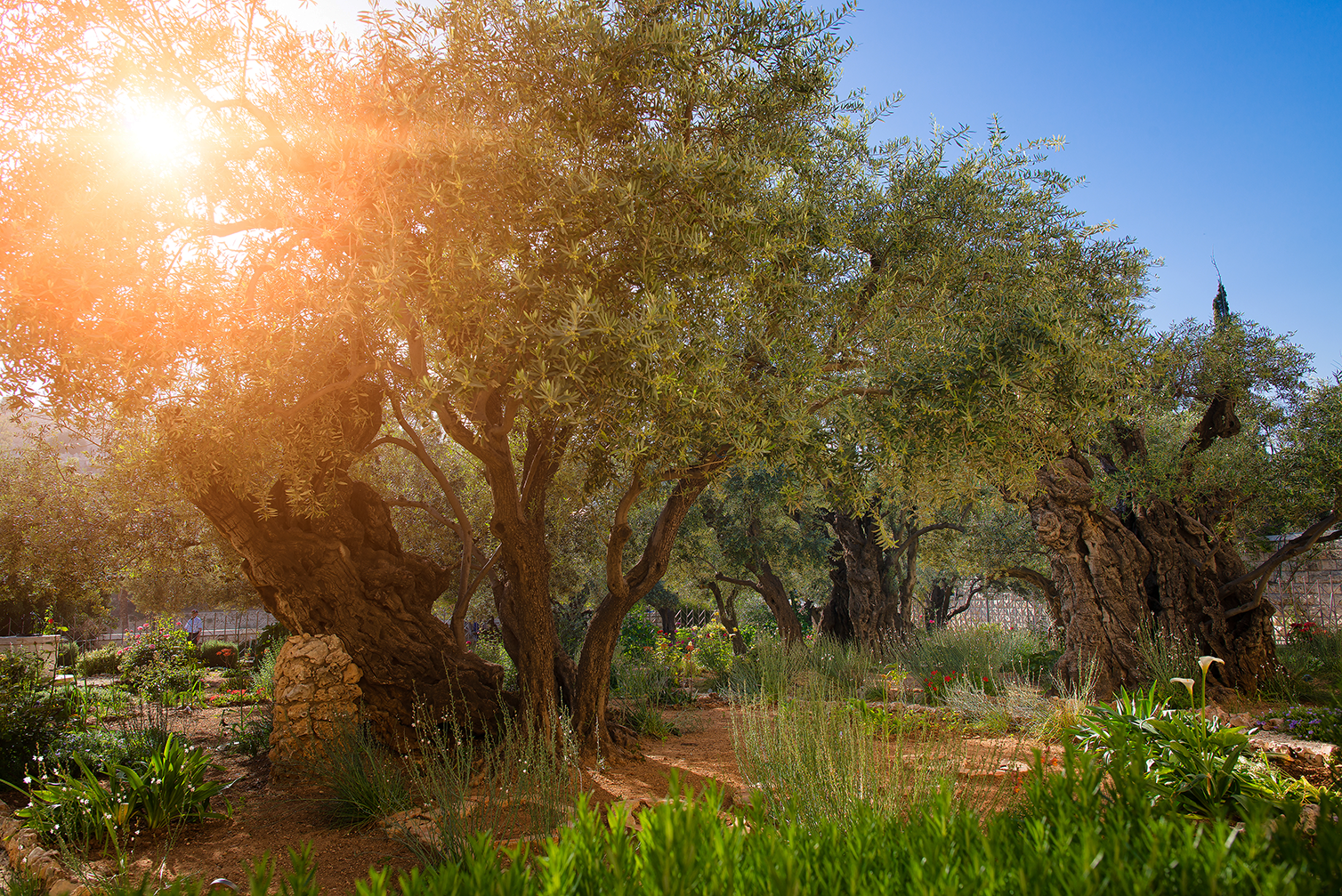 Garden of Gethsemane Adjusted@0,33x.png
