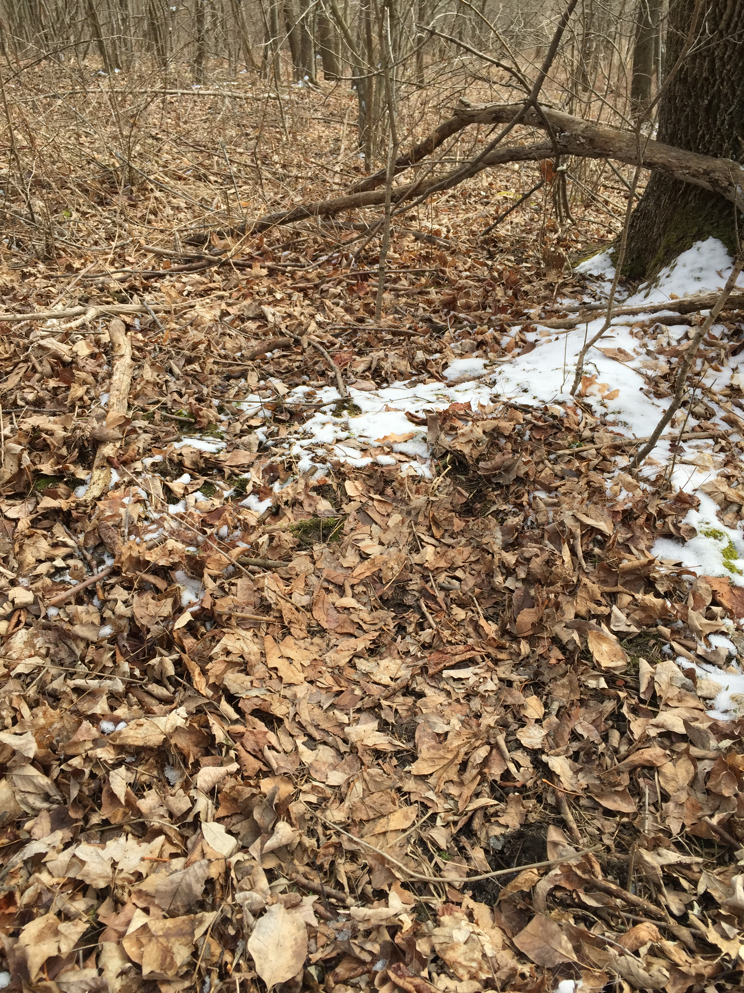 Beds may be just slight depressions in the leaves
