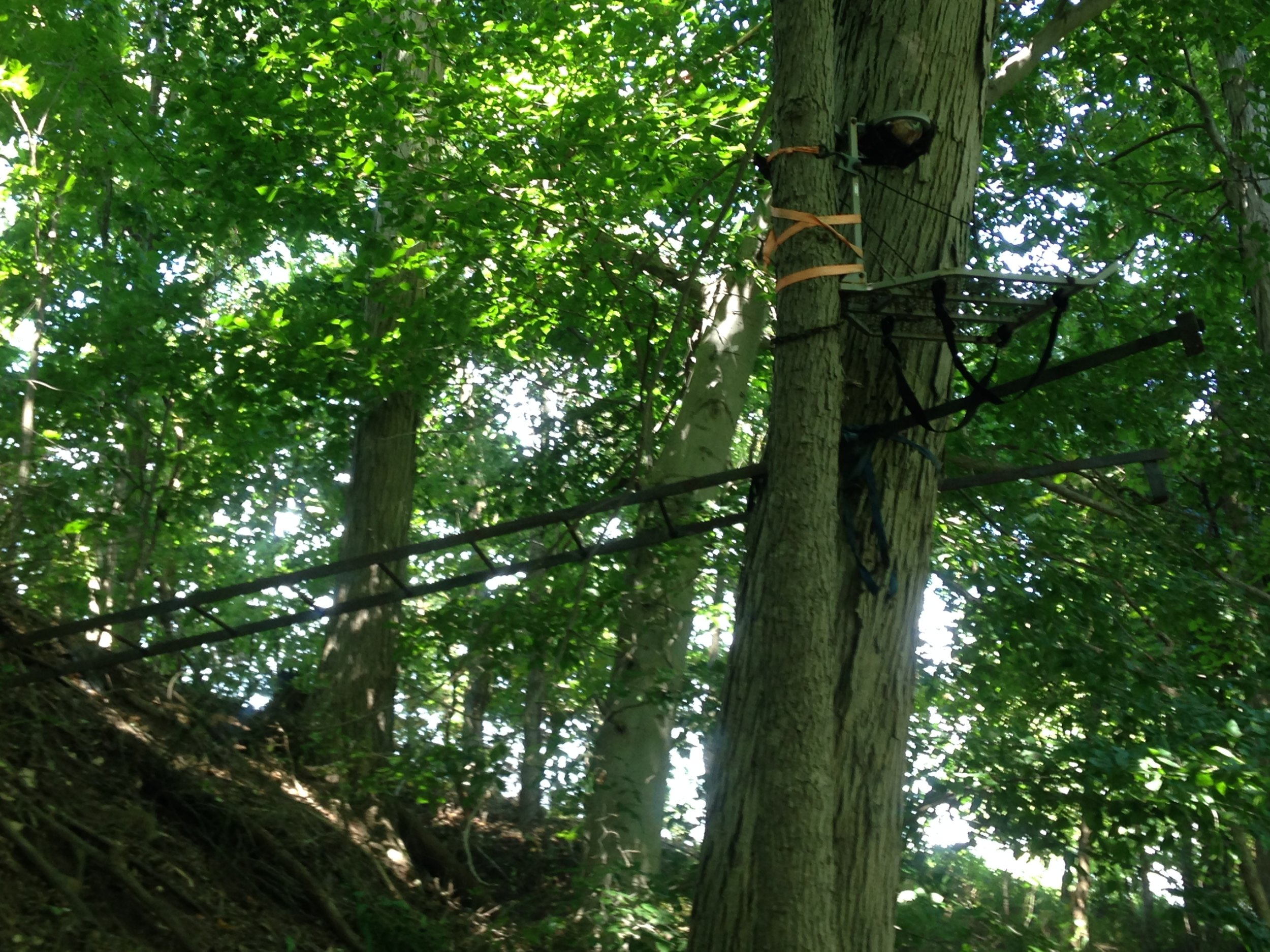 A tree stand on a piece of shared private land, left up for multiple seasons