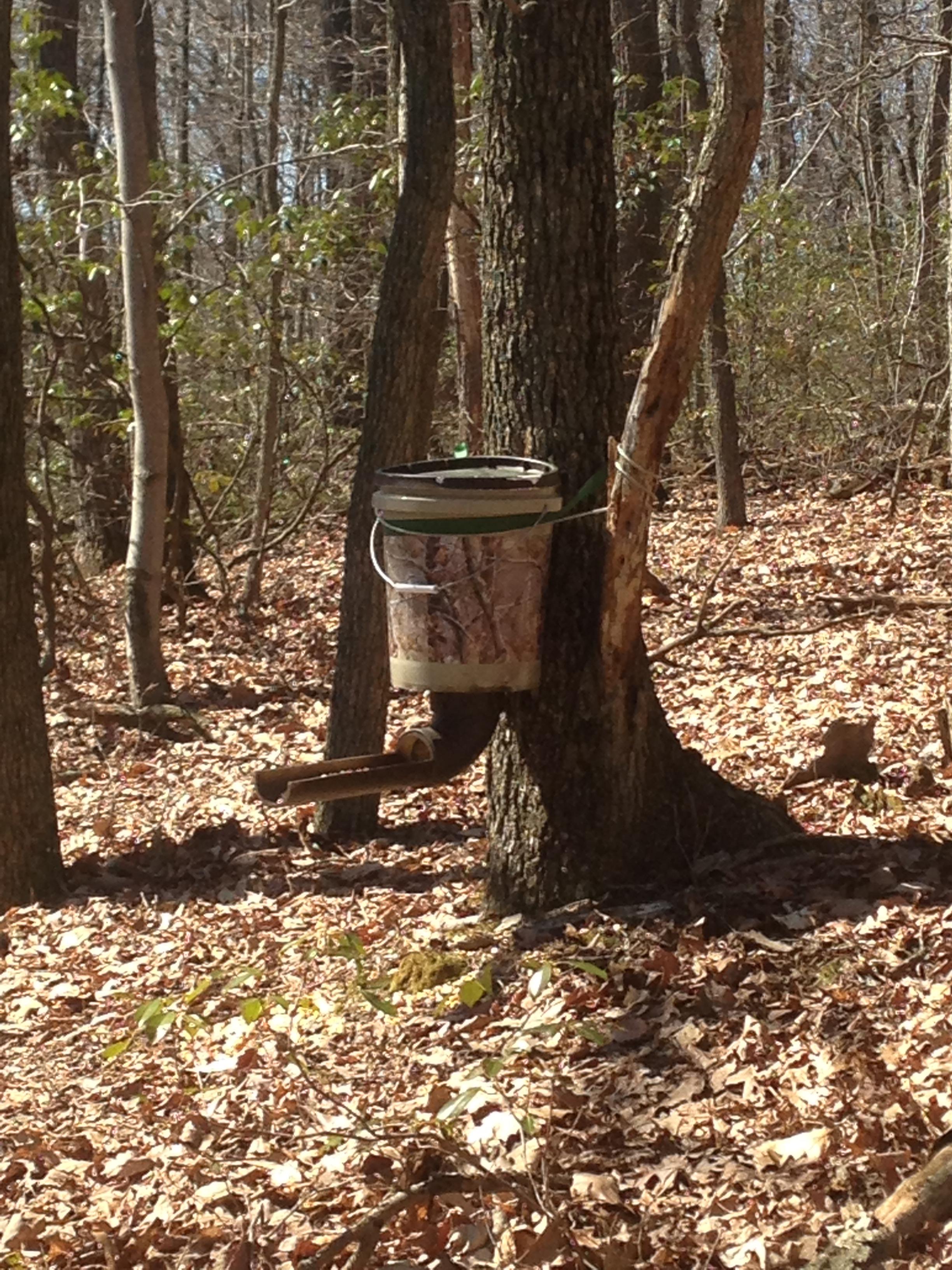 An illegal public land bait site in Pennsylvania.)
