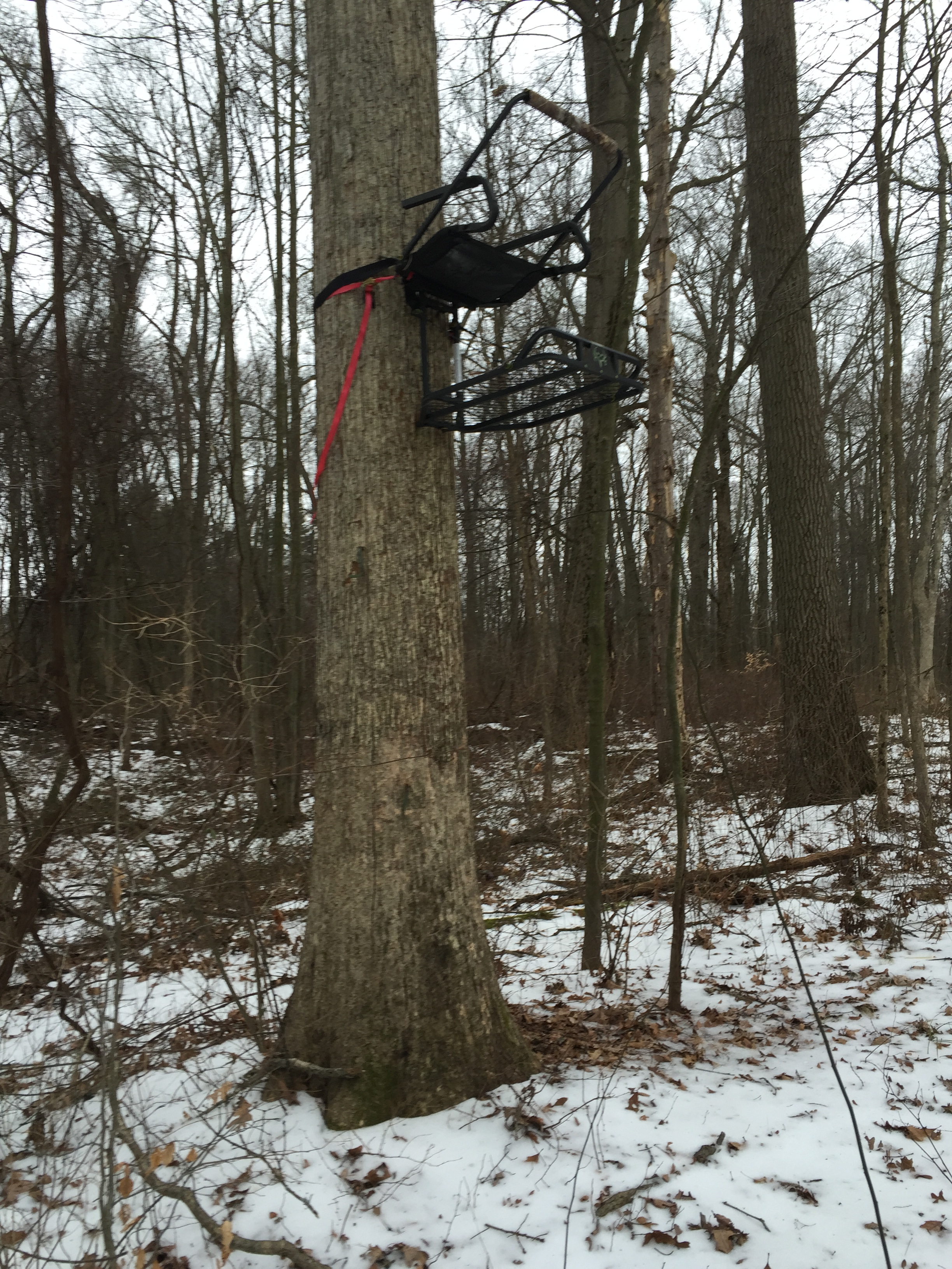 An illegal treestand left in for multiple seasons on public land. Use this intel to steer clear of such areas.)
