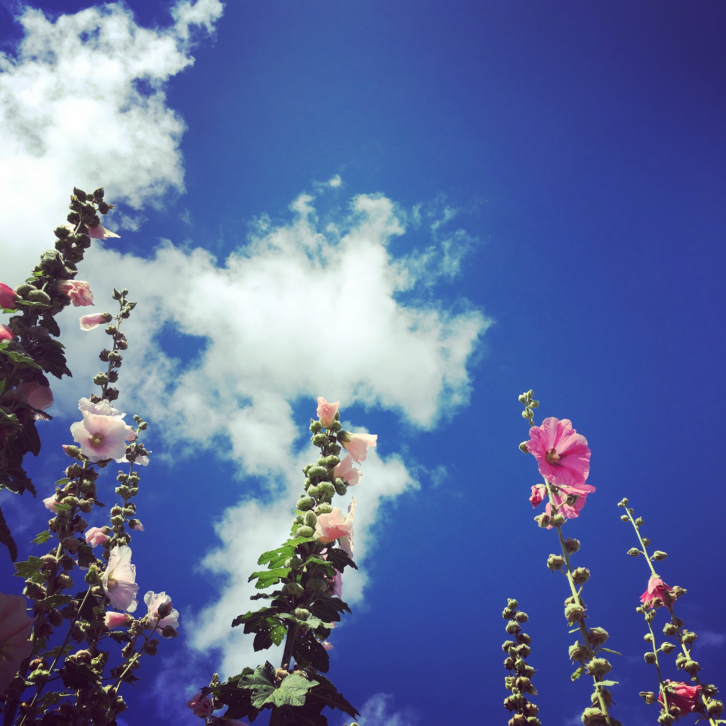 Sky Flowers.JPG