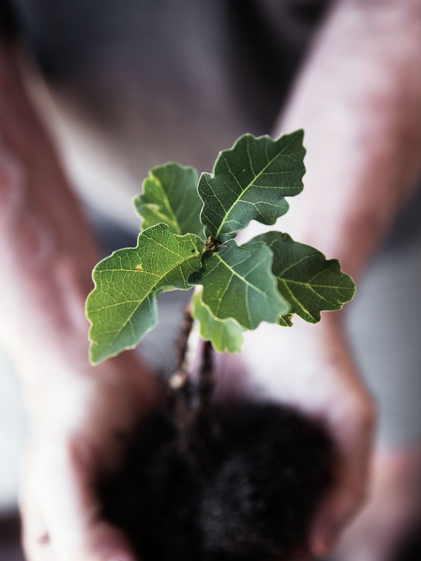 A TOAST #oak #tree #seedling #soil #dirt #roots #hands #palms #birthday #present #gift #SophiaTerraZiva