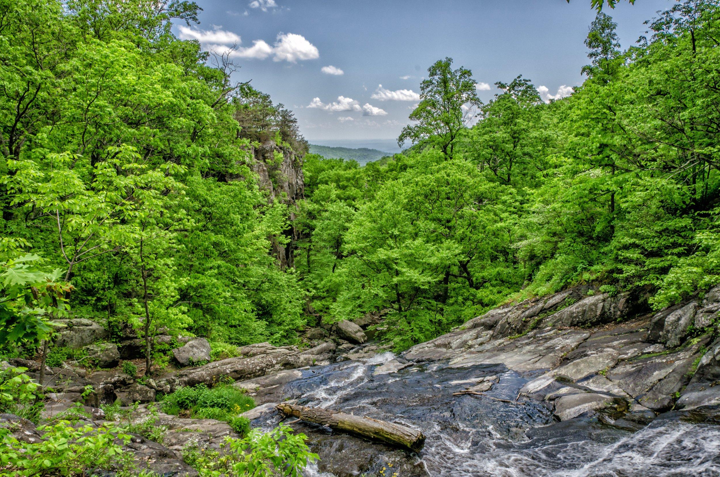 unsplash_mountain_stream_trees_JAdney.jpg