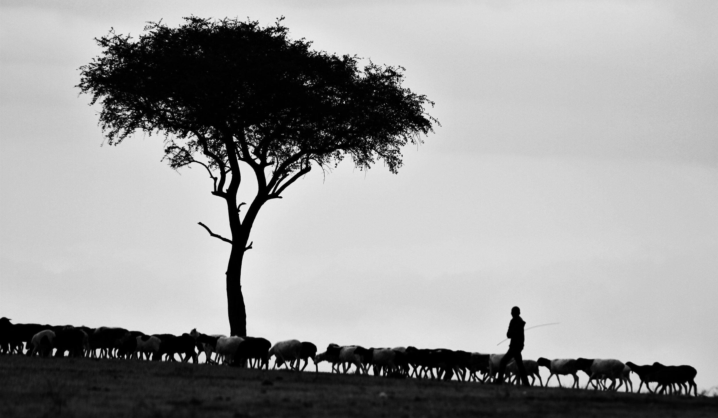 Photo by  Pawan Sharma  on  Unsplash