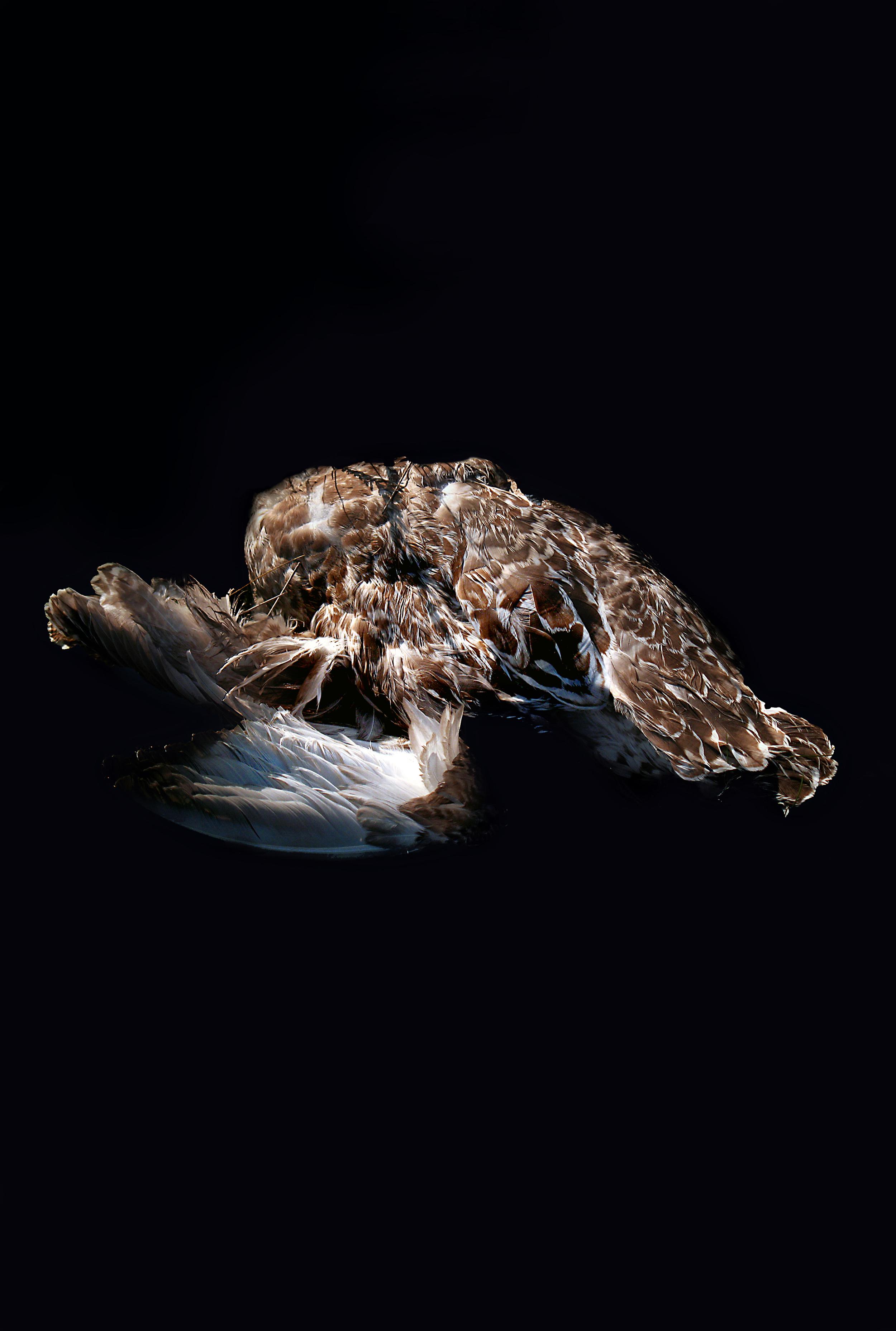 Carcass, lokki, 2015. Karoliina Paappa